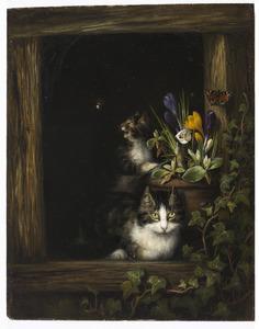 Twee katten bij een bloempot