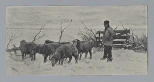 Boer met schapen in de sneeuw