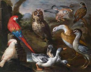 Exotische vogels uit de vogelverblijven van groothertog Cosimo III van Toscane