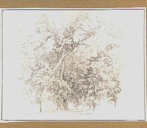 Landschap met loofbomen