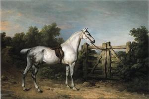 De grijze jager 'Piccolo' van sir Charles Mordaunt staat gezadeld en vastgebonden aan een houten hek