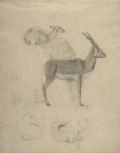 Schetsboekblad met schetsen van antilopen