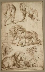 Tien leeuwen en een hond