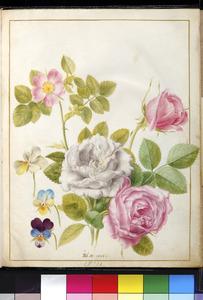 Vier rozen en drie viooltjes