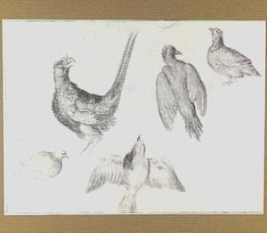 Studie van een fazant, een groene specht, een patrijs en twee andere vogels