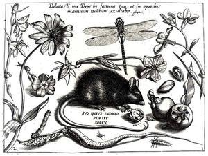 Muis, bloemen, libelle en andere insecten