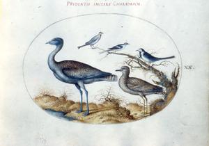 Vijf vogels, waaronder een griel