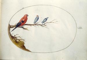 Twee zangvogels en een papegaaiachtige