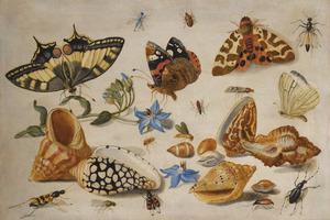 Studie van schelpen, vlinders en insekten op een witte achtergrond
