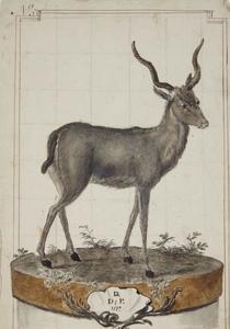Antilope (bosbok?) op een voetstuk