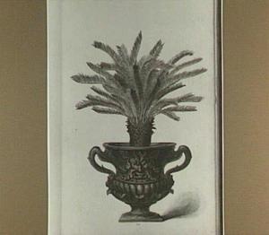 Palmboompje in een pot (palma vinifera todda panna horti mallabarici)