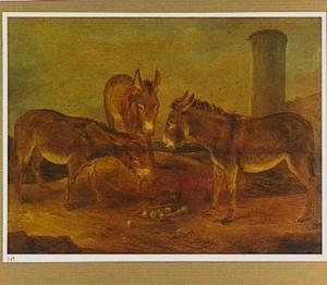 Studie van drie ezels