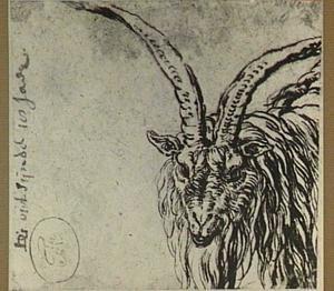 Kop van een geit