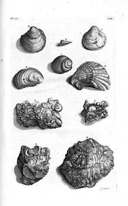 Europese fossiele schelpen