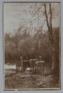 Drie koeien in de weide