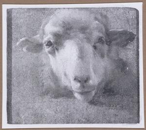 Kop van een schaap, frontaal