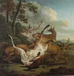 Luipaarden die een hert aanvallen in een parklandschap