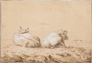 Twee stieren liggend in een weide