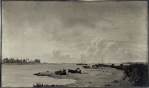 Koeien aan de oever van de IJssel