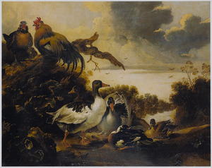 Pluimvee en watervogels aan de waterkant