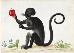 Aap, mogelijk een zwarte tamarin, met een westindische kers in zijn poot en een fantasie vergeet-mij-nietje