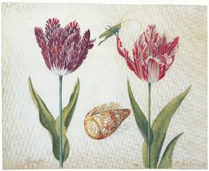 Twee tulpen (Armiant en Mester del Camp) met een sabelsprinkhaan en een schelp
