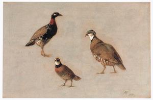 Studies van verschillende vogels