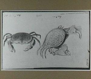 Twee Guajà's (krabben)