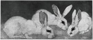 Drie witte konijnen