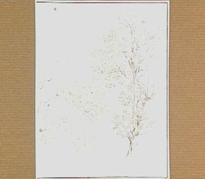 Loofbomen bij het meer van Albano, gezien vanuit Castelgandolfo