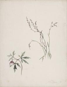 Bosanemoon en andere bloem