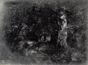 Berk in een donker bos