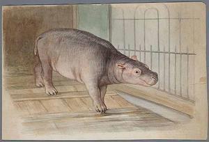 Aquarel van dwergnijlpaard