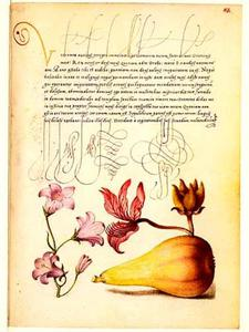 Rapunzelklokje, vuurwerkplant en peer
