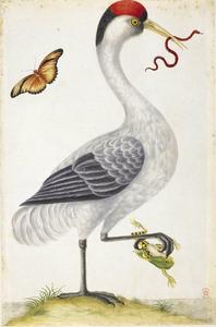 Canadese kraanvogel met valse koraalslang in snavel en gemarmerde boomkikker in poot; in de lucht een oranje passiebloemvlinder