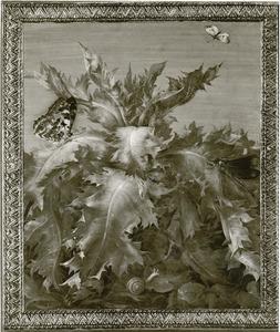 Studie van een distel met vlinders, andere insecten en een slak