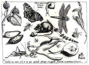 Muis, insecten, bloemen, een mossel, bramen en een halve appel