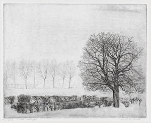 Winterlandschap met heg en grote boom