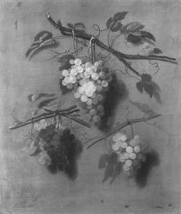 Trompe l'oeil stilleven van druiventrossen
