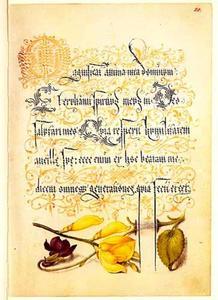 Maarts viooltje en bezembrem