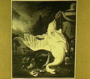 Dode zwaan en pauw voor een lusthof