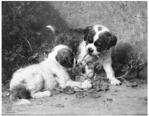 Twee spelende jonge St. Bernard honden