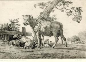 Koe en schapen