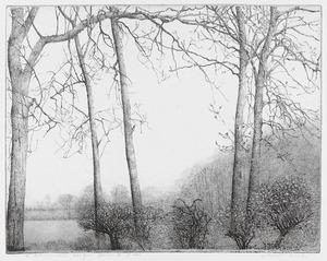 Lente, struiken voor hoge bomen