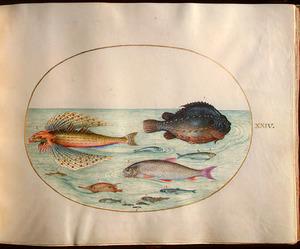 Dertien vissen