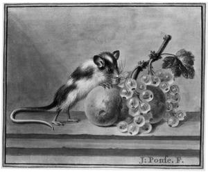 Muis knabbelend aan fruit