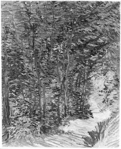 Een pad in het bos
