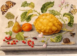 Stilleven van vruchten en insecten op een stenen tafel