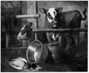 Koeien in de stal met dode eend en koperen ketel