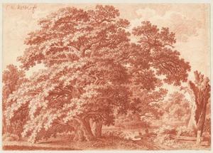 Eikenboom bij een meer